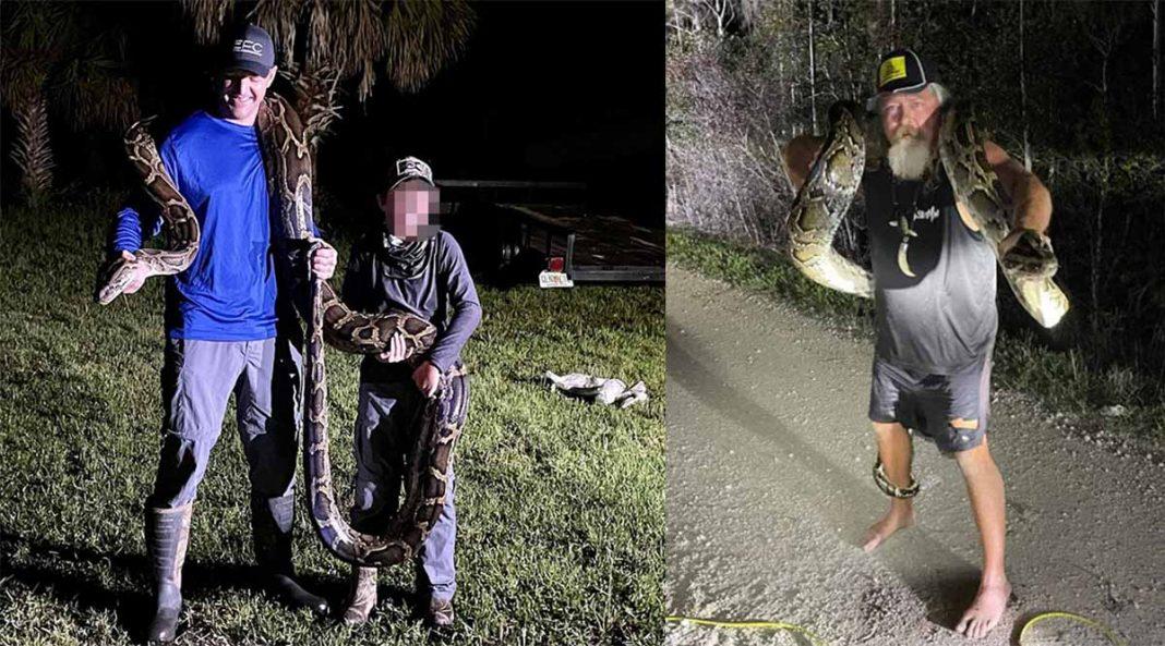 pitón gigante en Florida en el Python Challenge