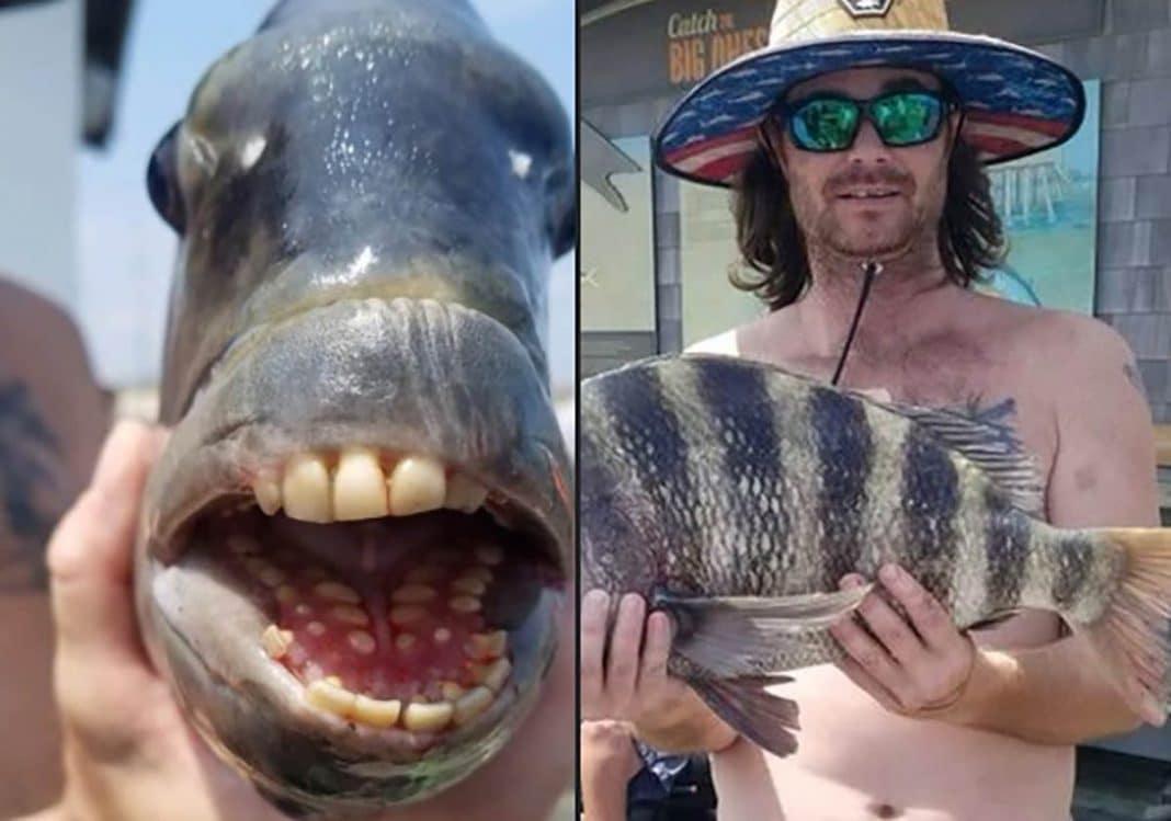 """Pez con """"dientes humanos"""" capturado en EEUU"""
