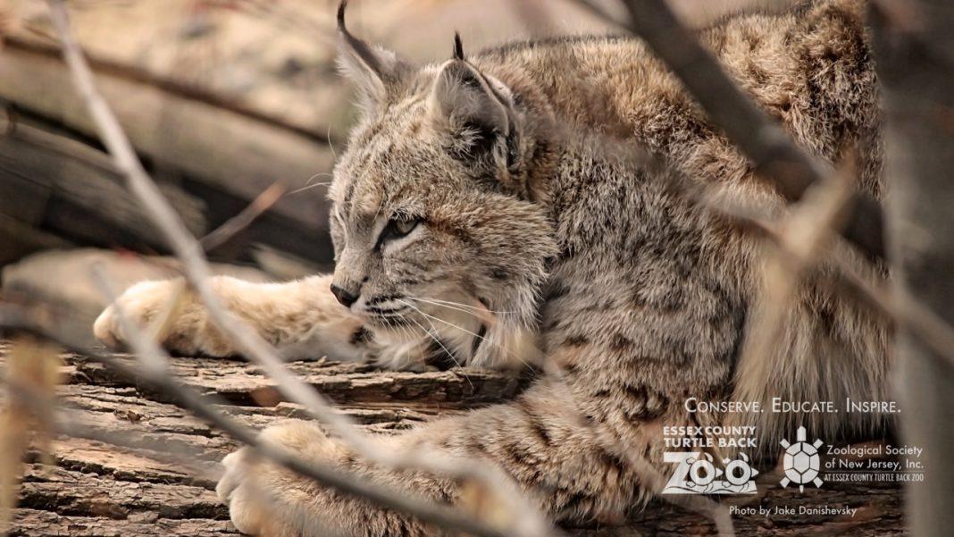Animal del zoo de New Jersey
