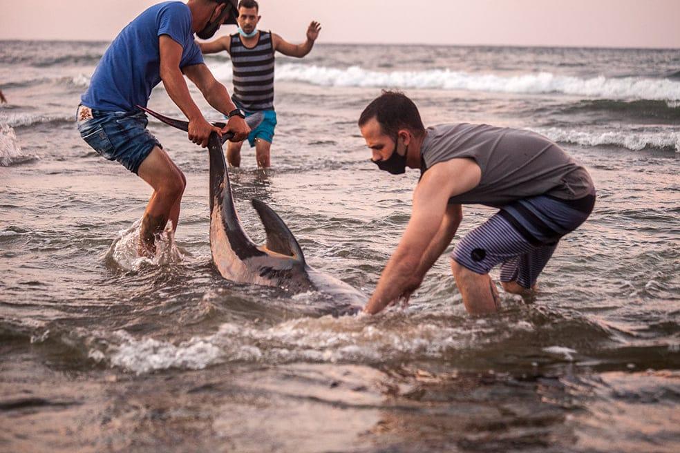 Jóvenes en Cojímar devuelven a unos delfines al mar.
